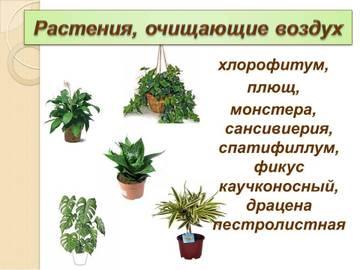 http://sg.uploads.ru/t/ayTx1.jpg