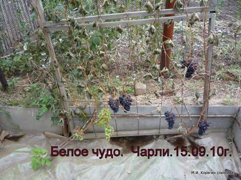 http://sg.uploads.ru/t/bLuZi.jpg