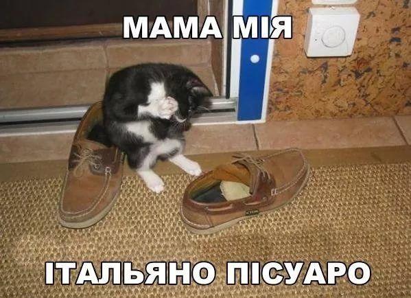 http://sg.uploads.ru/t/bW0X7.jpg