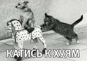 http://sg.uploads.ru/t/bW7lh.jpg