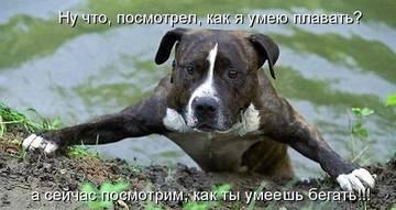 http://sg.uploads.ru/t/baGfK.jpg