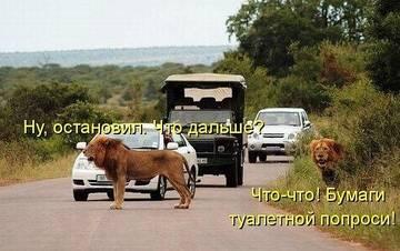 http://sg.uploads.ru/t/bq8OD.jpg