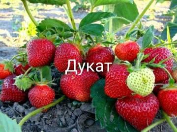 http://sg.uploads.ru/t/cOGS9.jpg