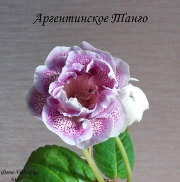 http://sg.uploads.ru/t/dZ08p.jpg