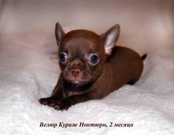 http://sg.uploads.ru/t/fNSvY.jpg