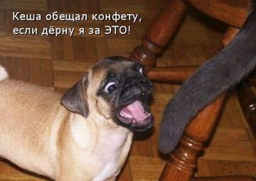 http://sg.uploads.ru/t/fV7CS.jpg