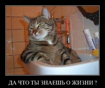 http://sg.uploads.ru/t/fXxi0.jpg