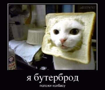 http://sg.uploads.ru/t/g4zfT.jpg