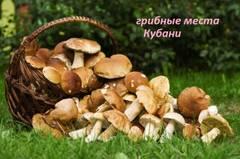 http://sg.uploads.ru/t/gUWlF.jpg
