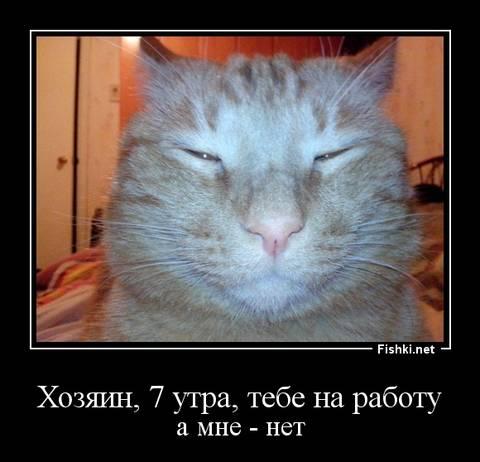 http://sg.uploads.ru/t/gnbFA.jpg