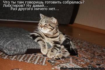 http://sg.uploads.ru/t/hU1Zx.jpg