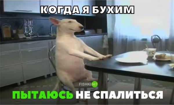 http://sg.uploads.ru/t/iw85a.jpg