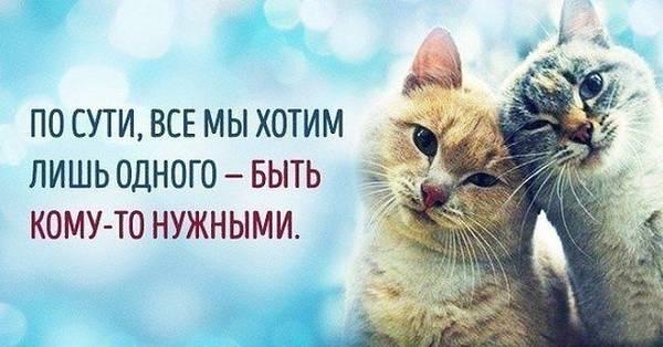 http://sg.uploads.ru/t/j2o35.jpg