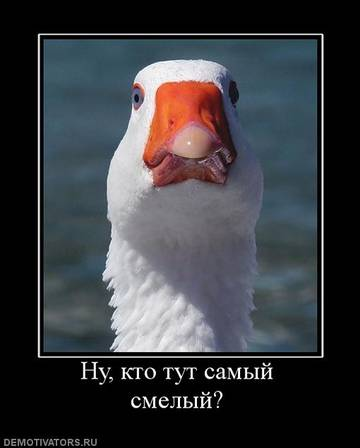 http://sg.uploads.ru/t/jBwN7.jpg