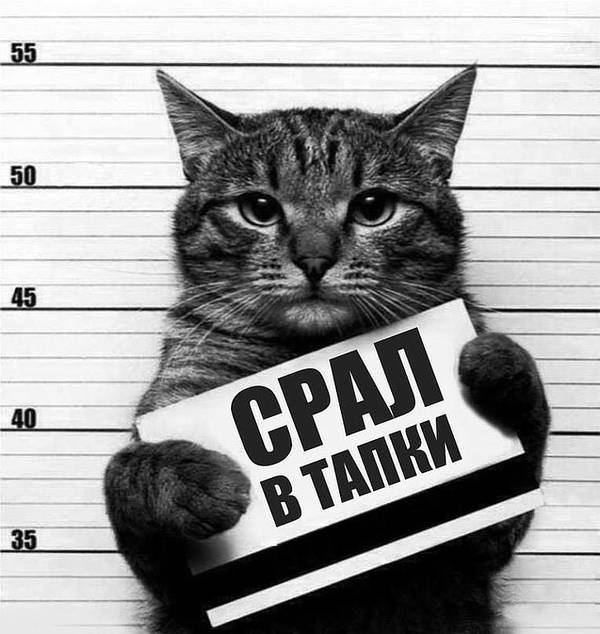 http://sg.uploads.ru/t/jMceK.jpg