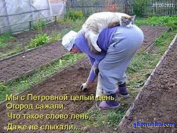 http://sg.uploads.ru/t/jQwot.jpg