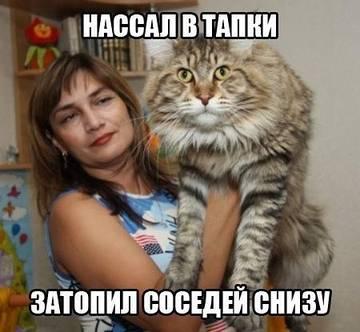 http://sg.uploads.ru/t/kB5uZ.jpg