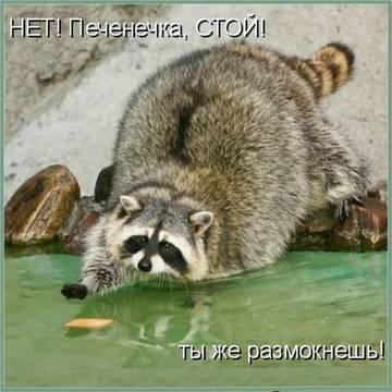 http://sg.uploads.ru/t/kgNVK.jpg