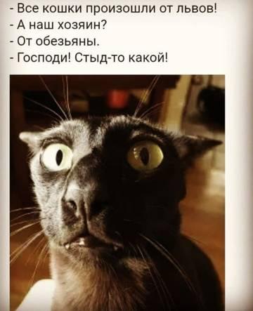 http://sg.uploads.ru/t/l5IQS.jpg