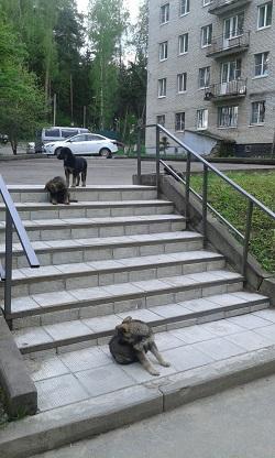 http://sg.uploads.ru/t/lOQ6h.jpg