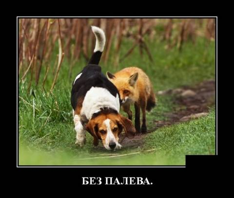 http://sg.uploads.ru/t/mMcGN.jpg