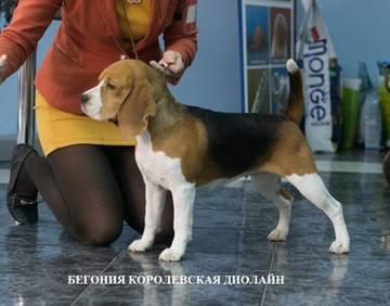 http://sg.uploads.ru/t/mSxak.jpg