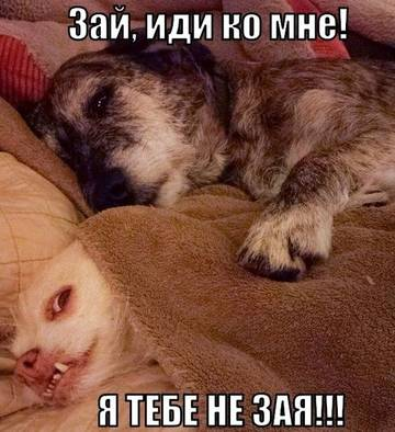 http://sg.uploads.ru/t/myibD.jpg