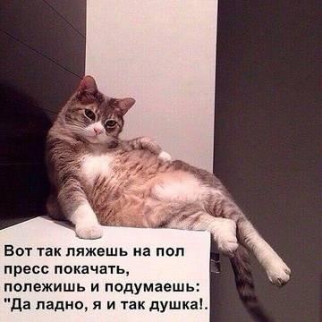 http://sg.uploads.ru/t/oD8O5.jpg