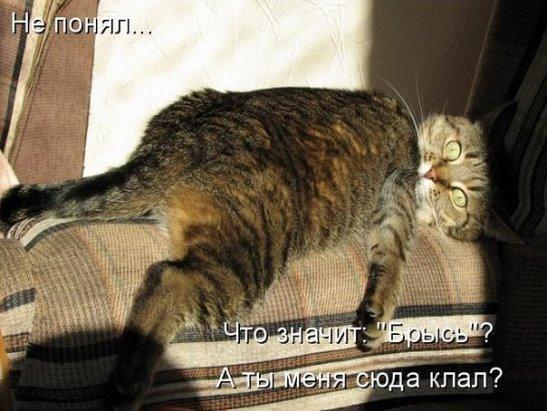 http://sg.uploads.ru/t/oQjFz.jpg