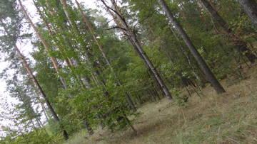 http://sg.uploads.ru/t/oUlET.jpg