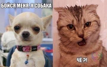 http://sg.uploads.ru/t/olpsK.jpg
