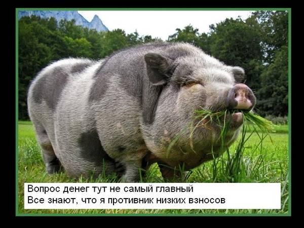 http://sg.uploads.ru/t/ovqnA.jpg
