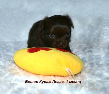 http://sg.uploads.ru/t/ozPm0.jpg