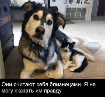 http://sg.uploads.ru/t/pzEvA.jpg