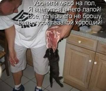 http://sg.uploads.ru/t/q8LrX.jpg