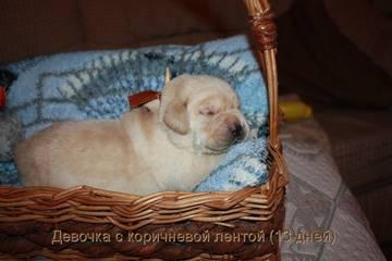 http://sg.uploads.ru/t/rPbVL.jpg