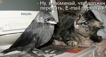 http://sg.uploads.ru/t/rR1JY.jpg