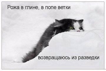 http://sg.uploads.ru/t/sG8JY.jpg