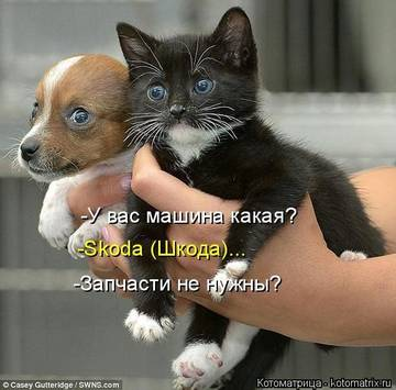 http://sg.uploads.ru/t/sR2vd.jpg