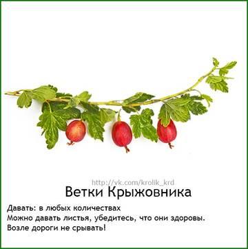 http://sg.uploads.ru/t/sbxnw.jpg