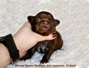http://sg.uploads.ru/t/slejY.jpg