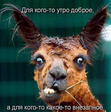 http://sg.uploads.ru/t/vNMjk.jpg