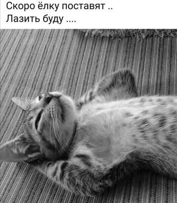 http://sg.uploads.ru/t/vZD0d.jpg