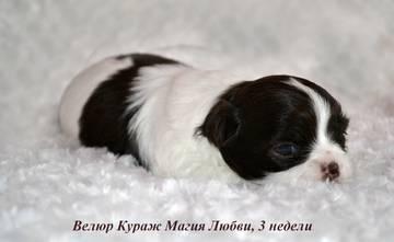 http://sg.uploads.ru/t/vef0T.jpg