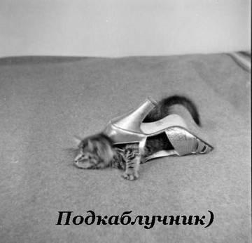 http://sg.uploads.ru/t/vx7SD.jpg