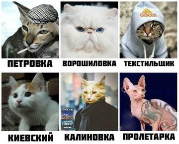 http://sg.uploads.ru/t/vyFO9.jpg