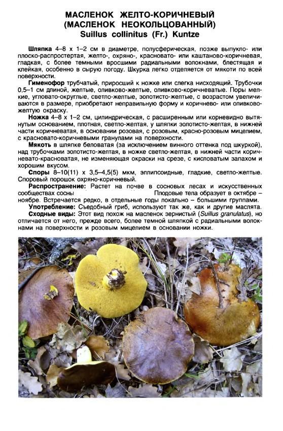 http://sg.uploads.ru/t/wNvy3.jpg