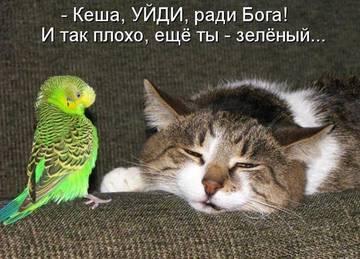 http://sg.uploads.ru/t/wqpea.jpg