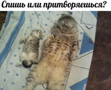 http://sg.uploads.ru/t/wz4xq.png