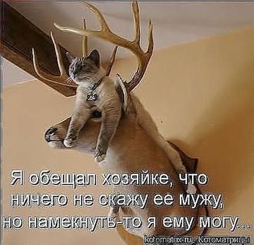 http://sg.uploads.ru/t/xgFLR.jpg